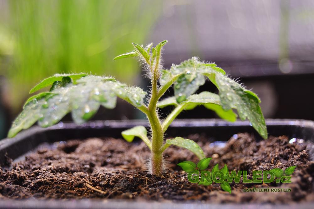 GROW_LED_SEED_pestovani_rostlin_01