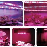 VYZKUM_GROW_LED_TECHNOLOGIE