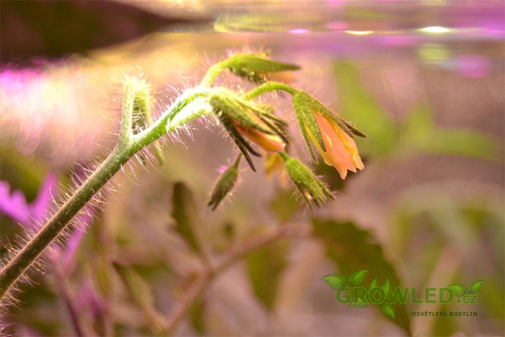 grow led seed_Spektrum_GLSA2_01