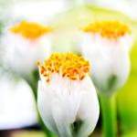 GROW_LED_CZ_rizene_pestebni_osvetleni_kultivaci_rostlin