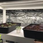 Pestovani_bazalky__led_pasek_grow_led_flexi_17