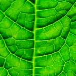 GROW_LED_cz_pestovani_okurky