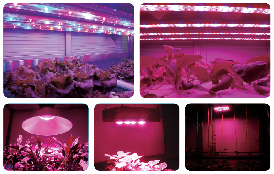 VYZKUM_GROW_LED_TECHNOLOGIE