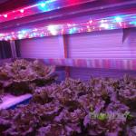 pouziti_grow_led_seed_grow_led_cz