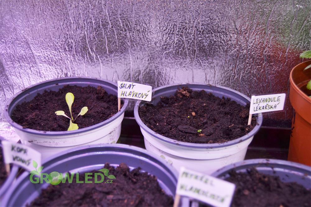 Pestovani_bylinek_indoor_led_osvetleni_GROW_LED_CZ_02