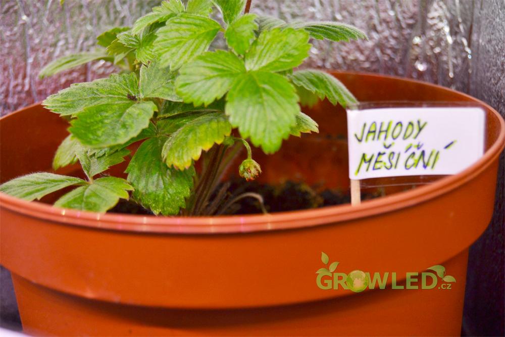 Pestovani_bylinek_indoor_led_osvetleni_GROW_LED_CZ_03