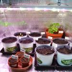 Pestovani_bylinek_indoor_led_osvetleni_GROW_LED_CZ_04