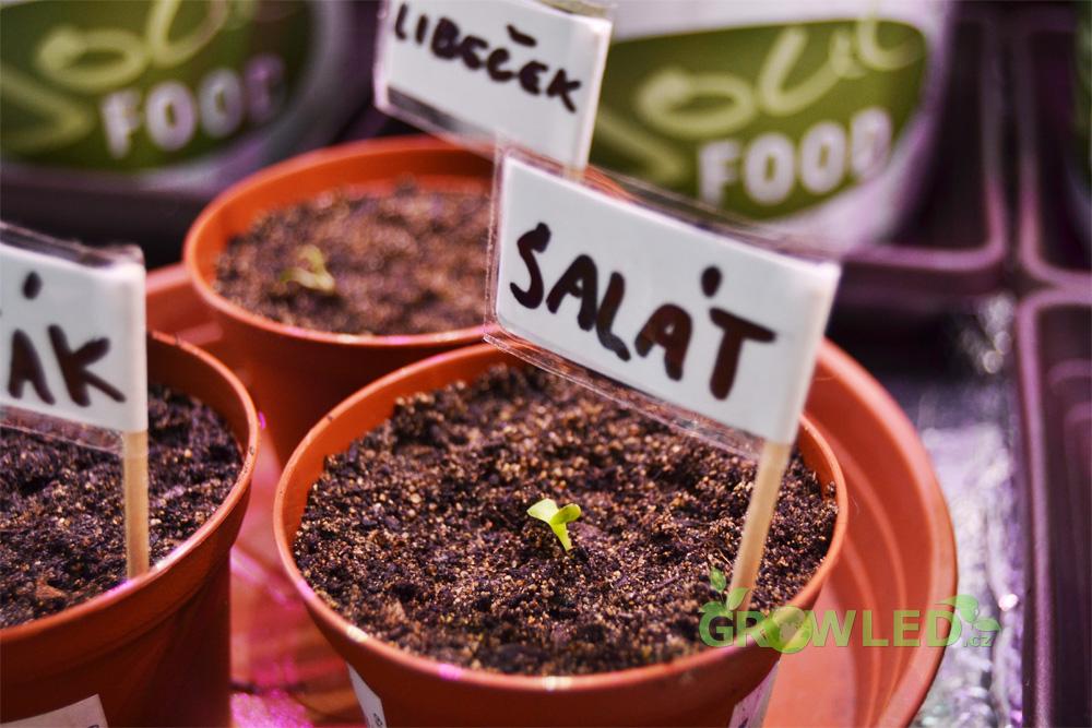 Pestovani_salatu_indoor_led_osvetleni_GROW_LED_CZ_03
